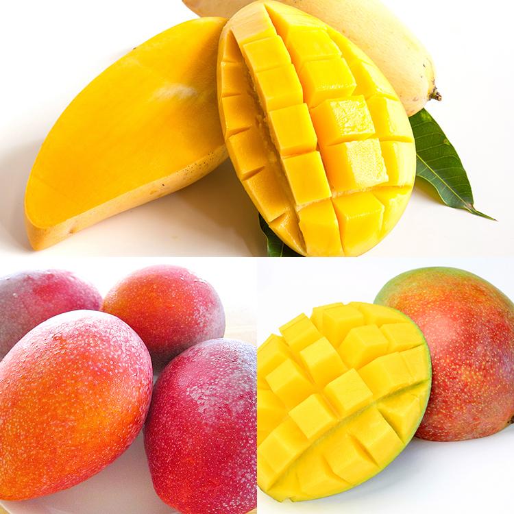 ワールドマンゴー食べ比べセット マンゴー