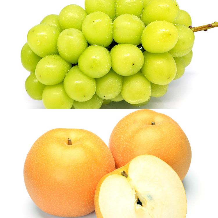 長野県産シャインマスカットと旬の梨セット ぶどう