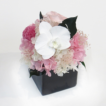[ベル・フルール]胡蝶蘭キューブS(ピンク) フラワーギフト